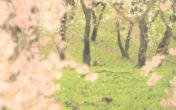 【アートフィルター解説】デイドリームを使用した撮影 ~白昼夢の世界へ~
